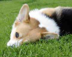 Tri in grass